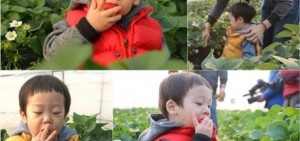 李輝才一家大游草莓園 貪吃雙胞胎變身「草莓大盜」