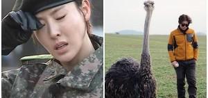《真正的男人》-《Animals》收視兩極分化 「MBC該怎麼辦?」
