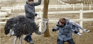 《Animals》銀赫給鴕鳥下跪,原因是?