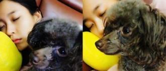 雪炫變身睡美人 可憐寵物狗無人陪