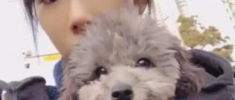 陪伴少女時代成員七年的狗狗離去,Sunny、孝淵和秀英等成員為它加油