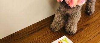 少女時代泰妍愛犬Zero一周歲!網友:澤哥已被打入冷宮了